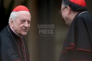 cardinal Rode -
