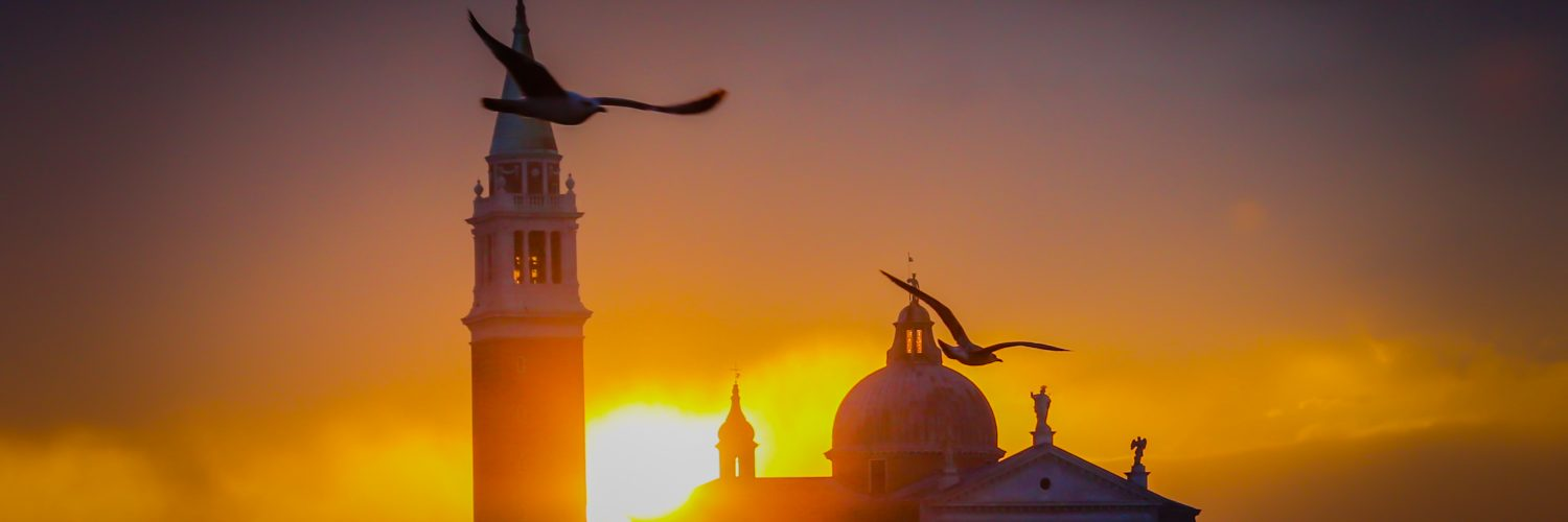 seagulls in the morning in venice